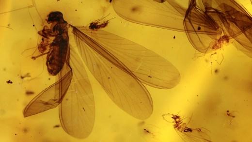 Termiten-Einschlüsse