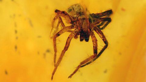 Große Spinne als Inkluse