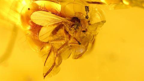 Fliege, Langbeinfliege als Bernstein Einschluss Puzzle
