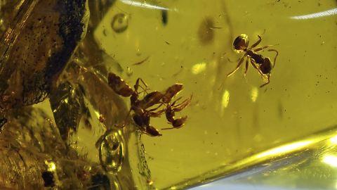Ameisen Einschlüsse
