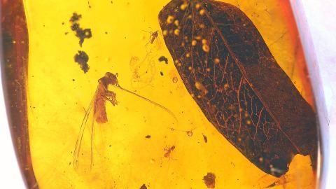 Blatt und eine Termite als Einschlüsse im Bernstein
