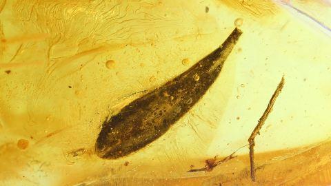 Blatt mit sichtbarer Zellstruktur als Einschlus