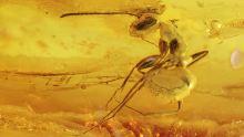 Große Ameise als Inkluse
