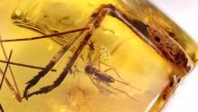 Beine vom großen Insekten im Bernstein