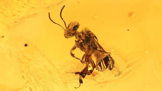 Bernstein mit Biene