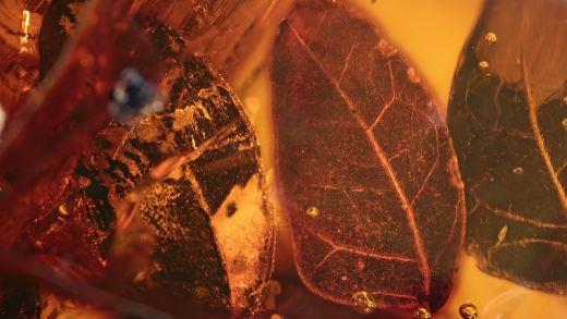 Blätter als Inklusen im Mexikanischen Bernstein