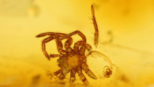 Kleine Spinne im Bernstein