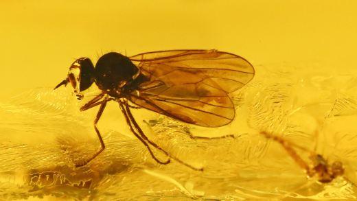 Mehrere Insekten als Inklusen