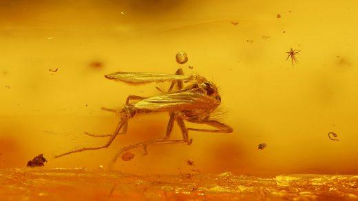 Mehrere Mücken als Inklusen