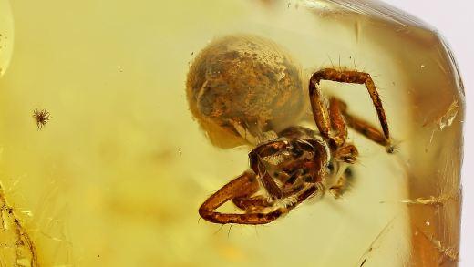 Spinne als Einschlusse im Bernstein