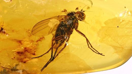 Fliege als Einschluss